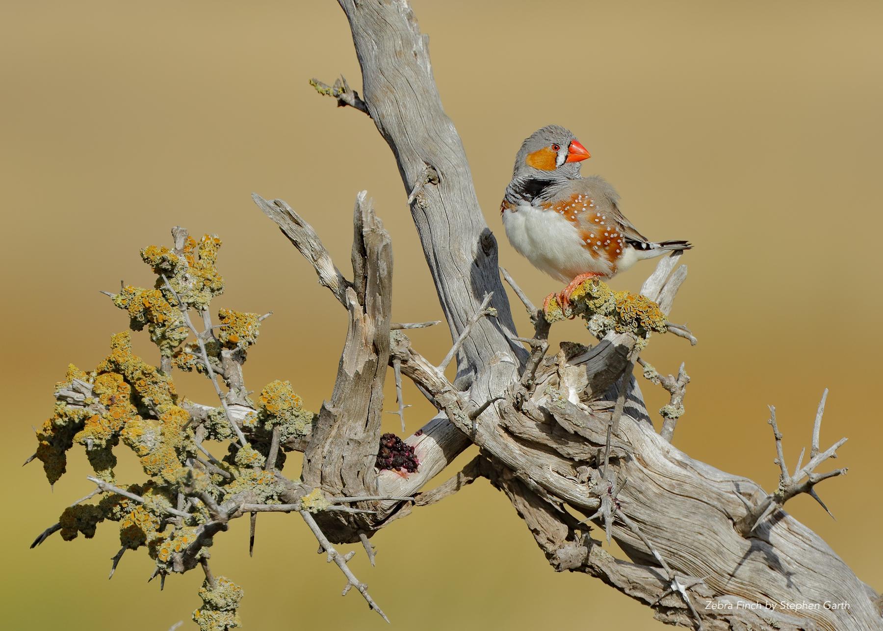 BirdLife Photography Biennial Conference